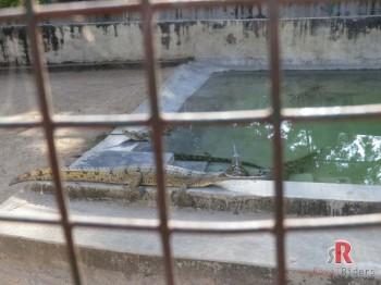 The Crocodile Centre at Deori, Morena