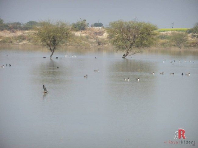 A small water body in our way through Chambal barrens.