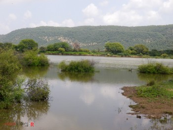 Lake inside sariska national park