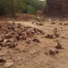 talab-shahi-weRR-031